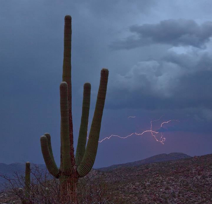 Saguaro,storm,arizona, photo