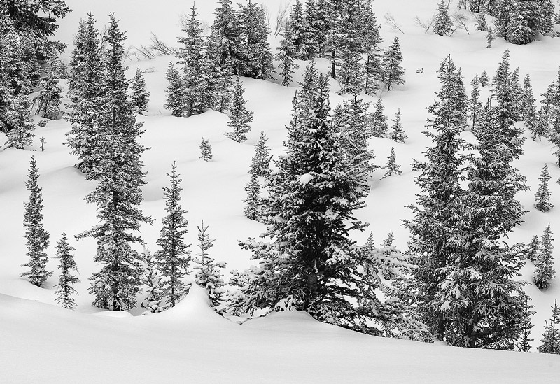 Winter,Forest,Ouray,Colorado, photo
