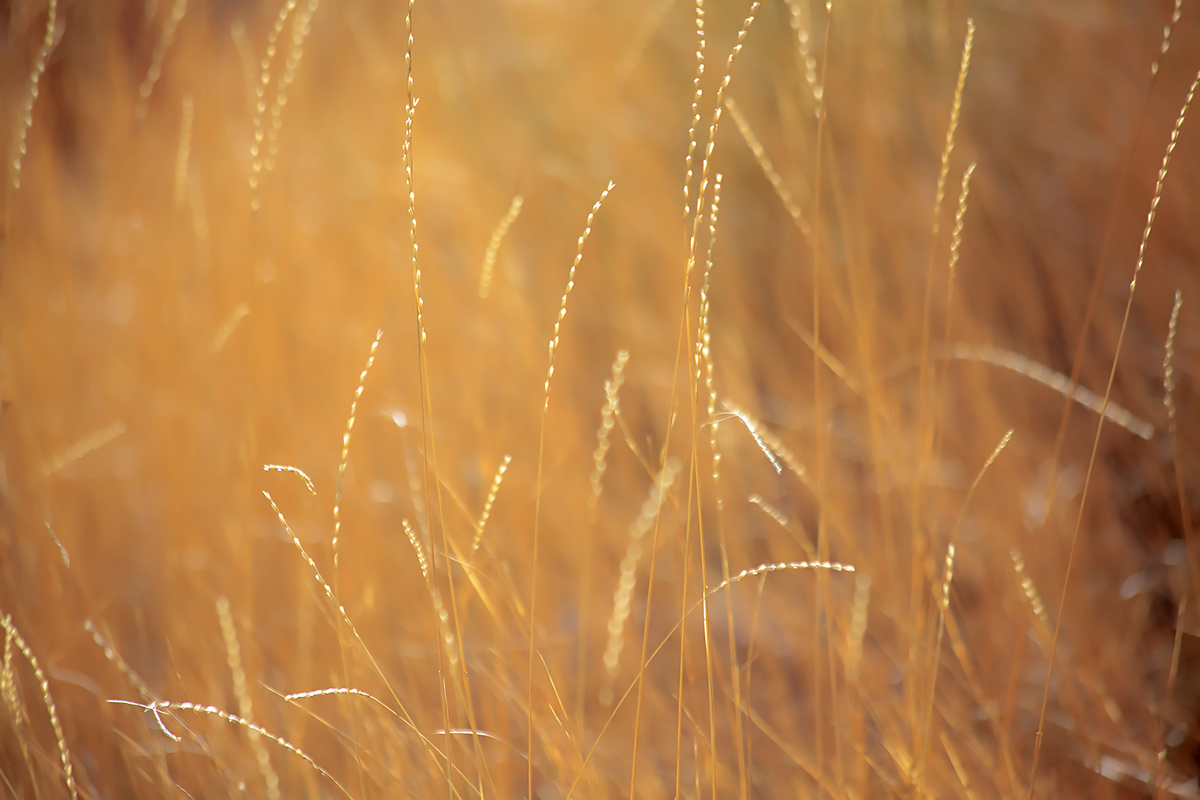Blodgett Peak, Colorado Springs, grasses, photo