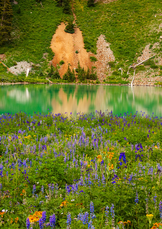 Wildflowers and lake reflections at lower Blue Lake.