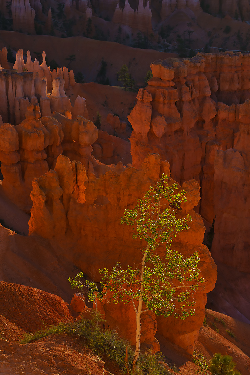 Navajo Trail, Bryce Canyon, Utah, sunrise, photo
