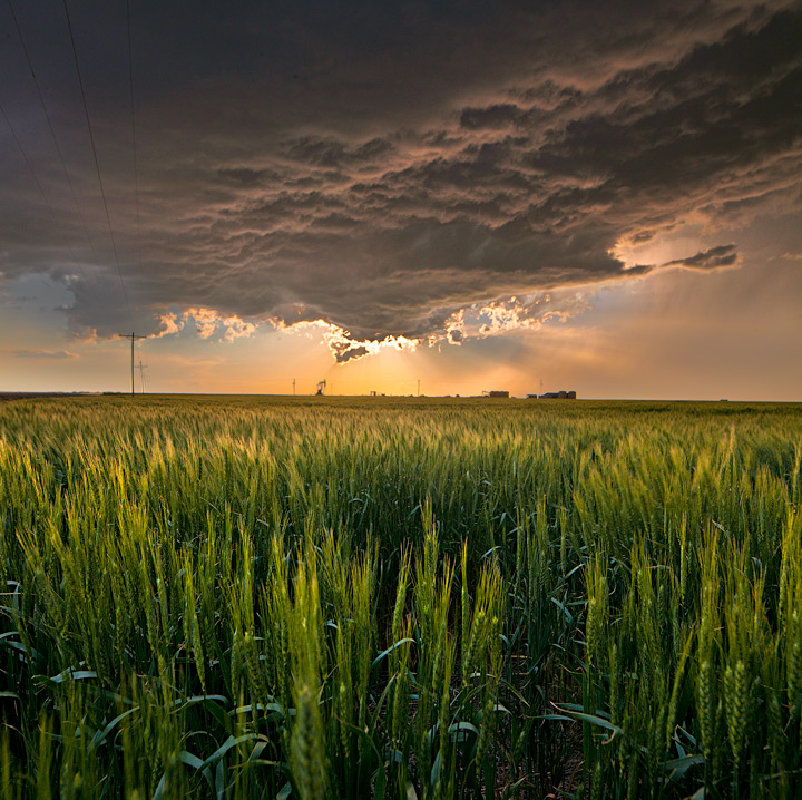 Wheat fields and storm as the sun sets.