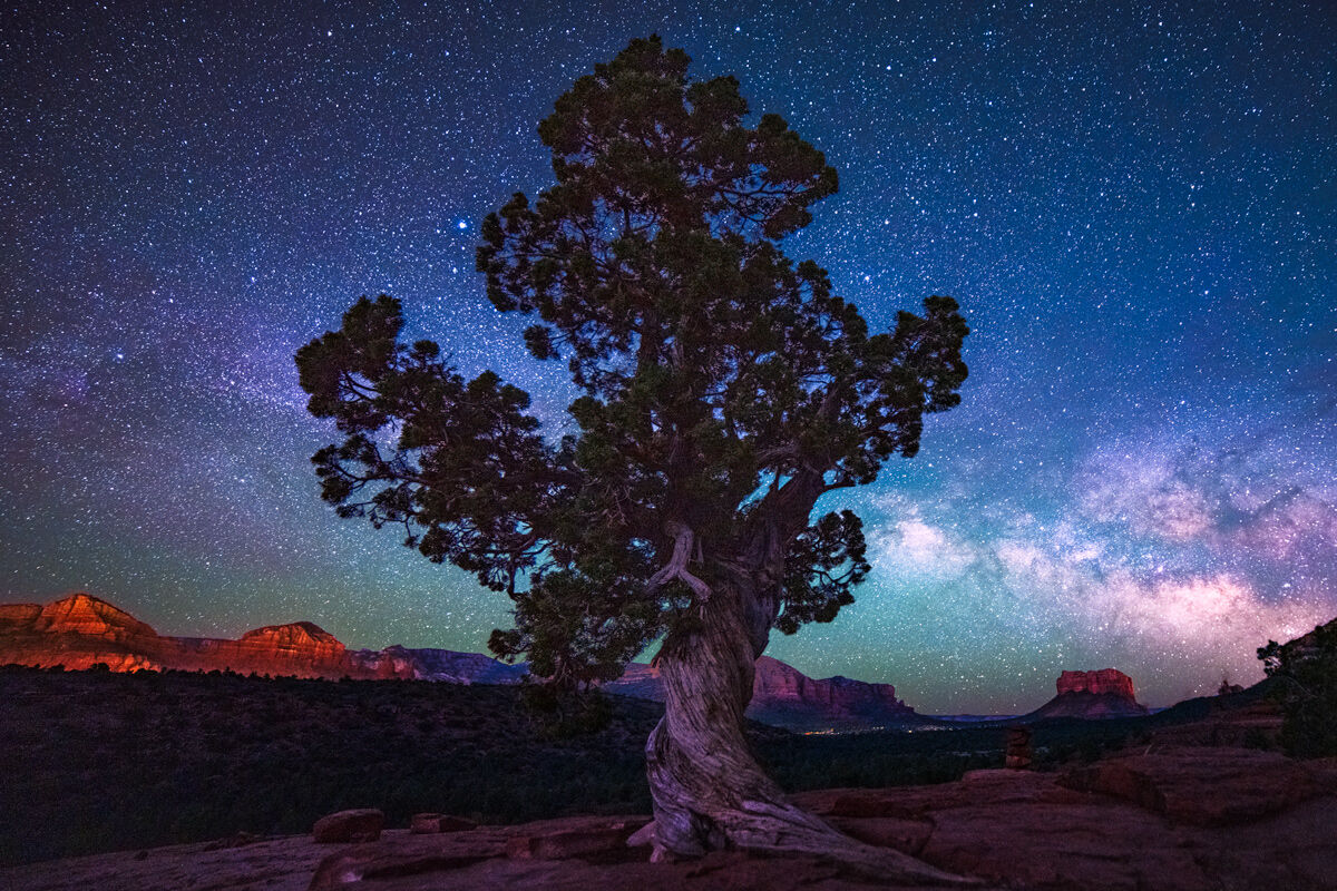 A twisted tree on Cathedral Rock at night with the Milky Way rising over Courthouse Butte in the distance.
