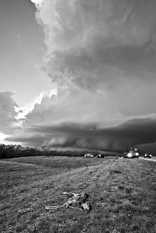 deer,supercell,Sterling City,texas,supercell, photo