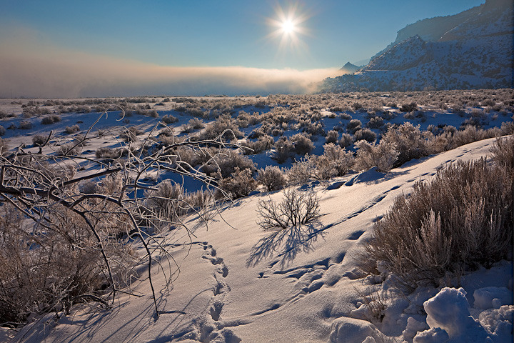 Animal Tracks and hoar frost covered trees as morning fog burns off at the base of Colorado National Monument.