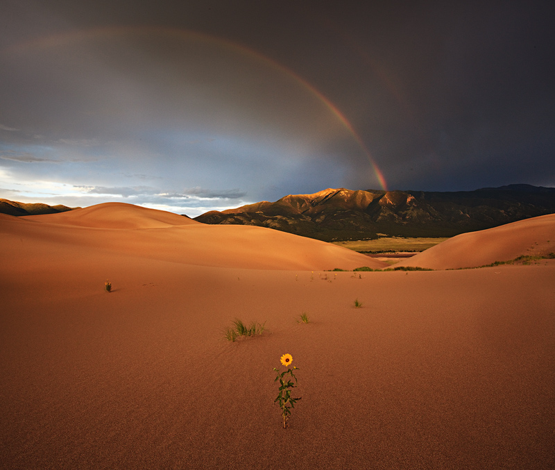 sunflower,great sand dunes,colorado,rainbow