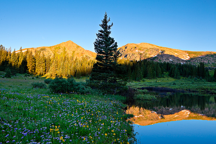 Small pond near Eccles Pass inthe Gore Range of Colorado, with abundant wildflowers.