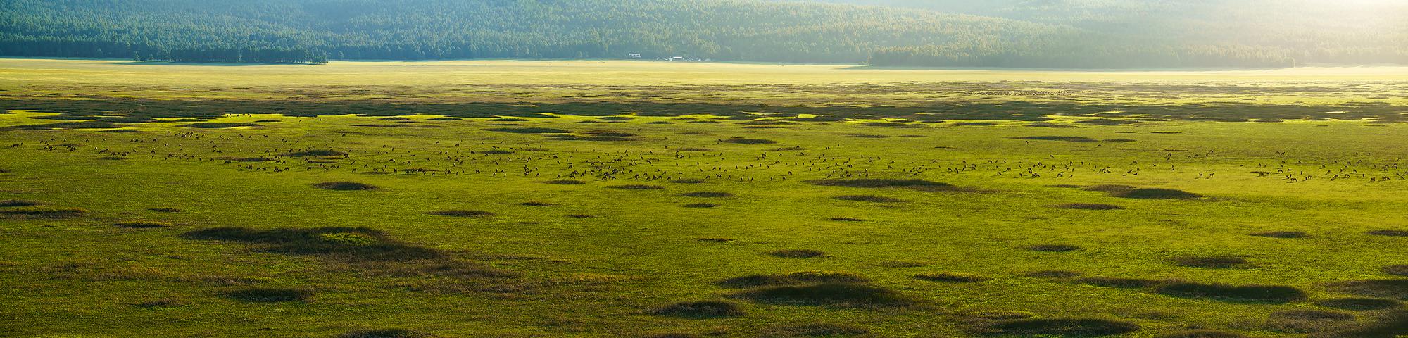 Well, 600 elk actually. At Mormon Lake.