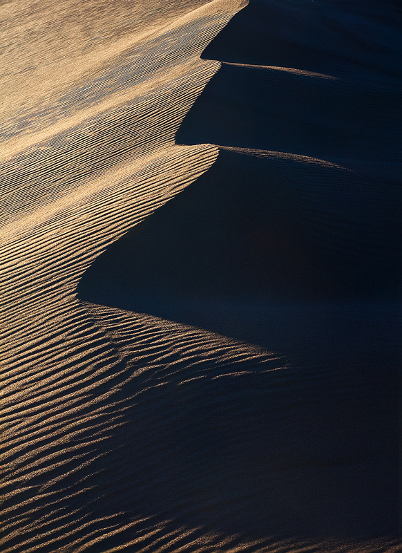 Wavey dune crests in late afternoon light.
