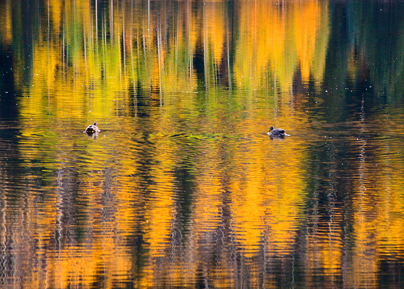 Red Mountain,Colorado,ducks, photo