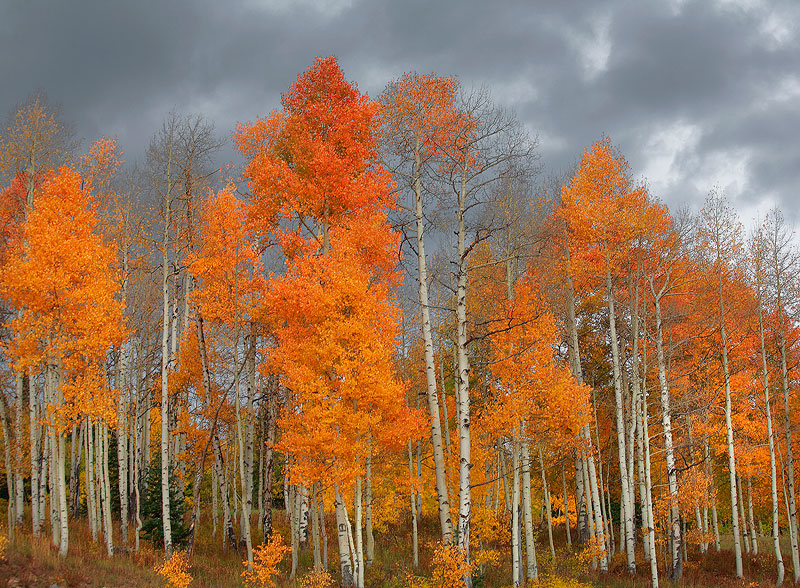 aspen,Kebler,Colorado, photo