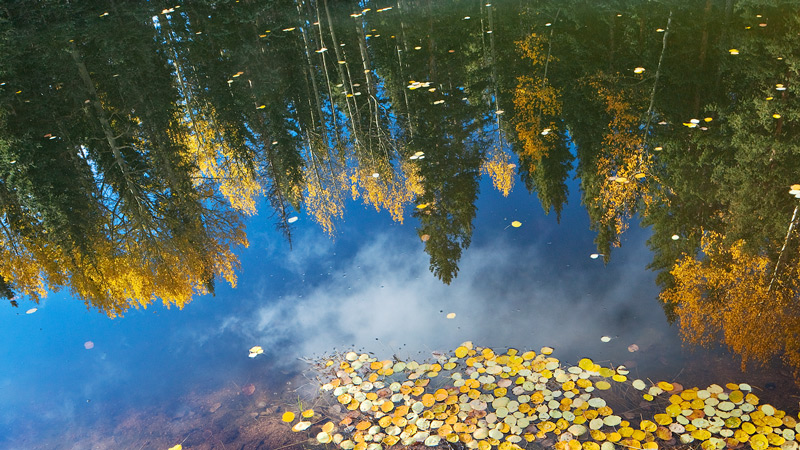 pond,Mueller State Park,colorado,reflections, photo