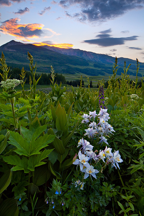 Gothic,colorado,columbine, photo