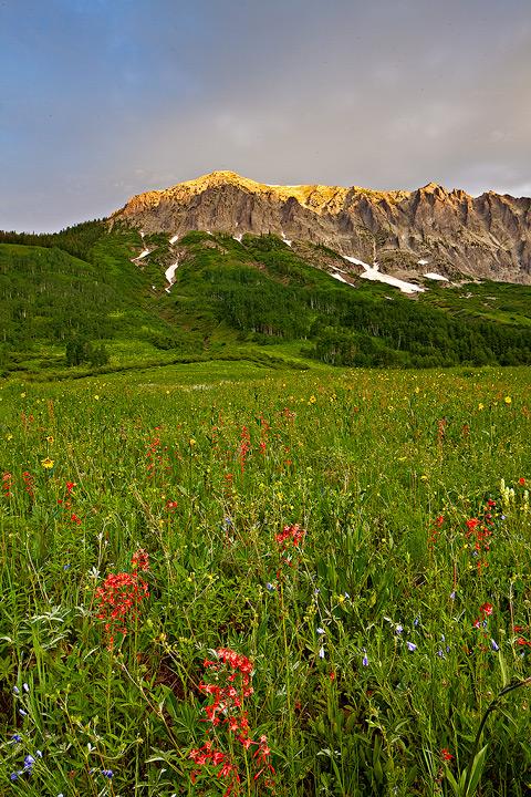 Scarlet Gilia,Gothic Mountain, photo