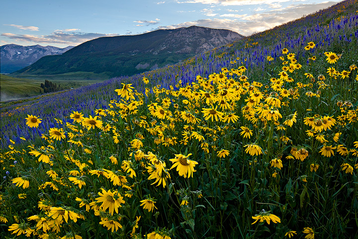 Crested Butte,Colorado, photo