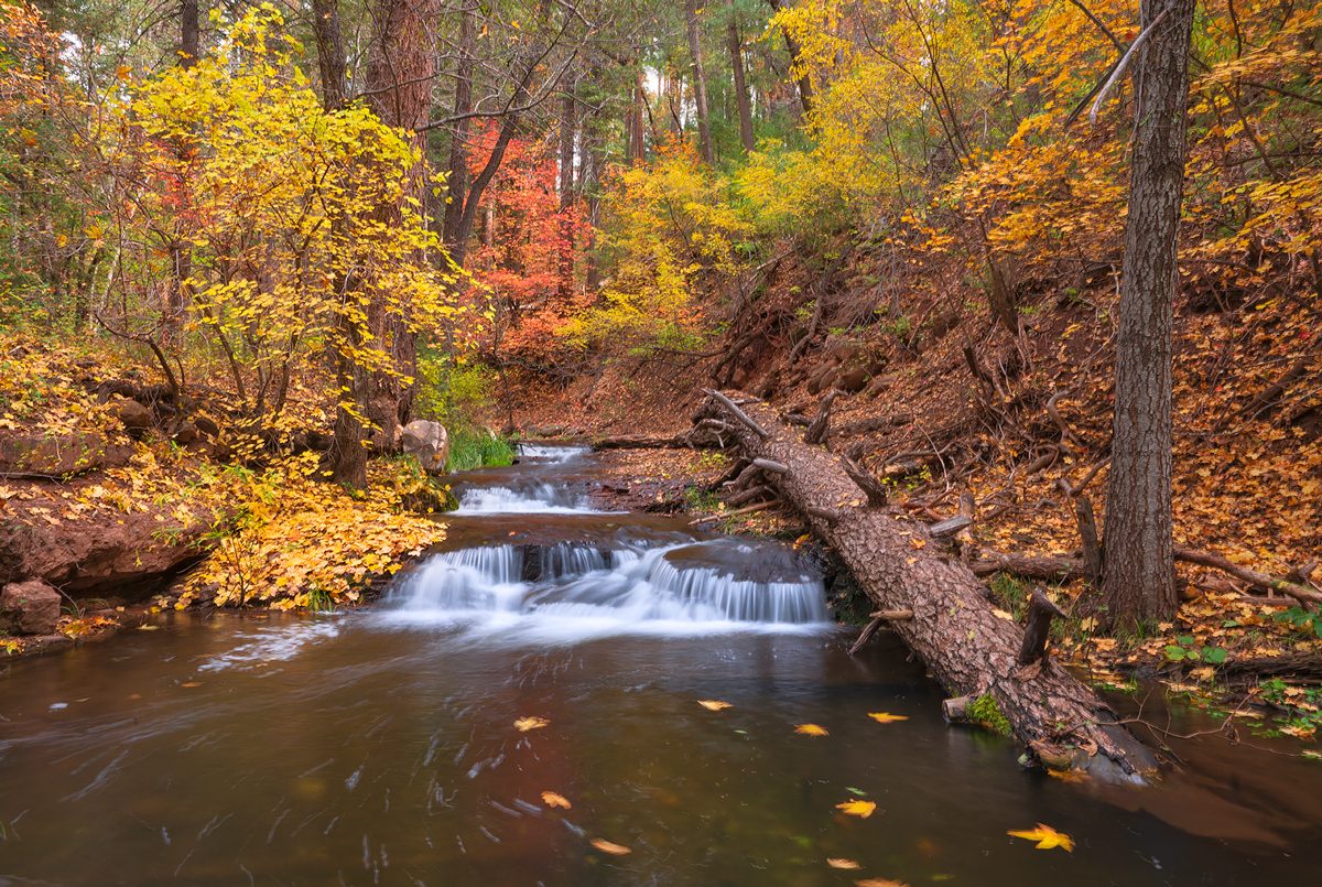 Horton Creek Trail, fall colors, Arizona, tonto, Payson, photo
