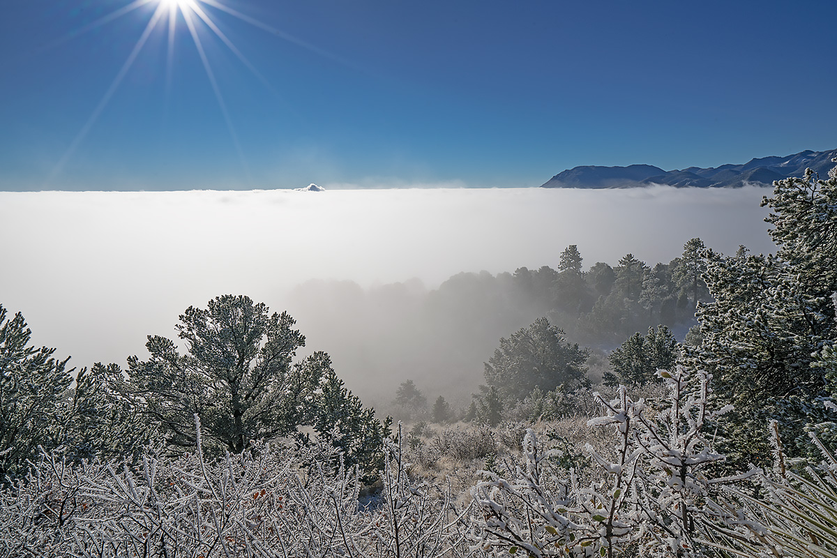 fog,rampart range,colorado,frost, photo
