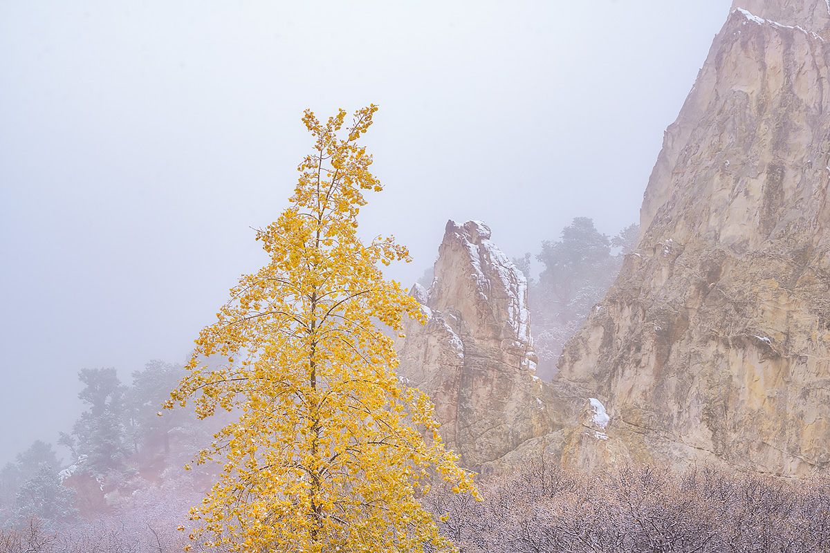 Some lingering fall colors in Garden of the Gods during a frosty foggy November morning.