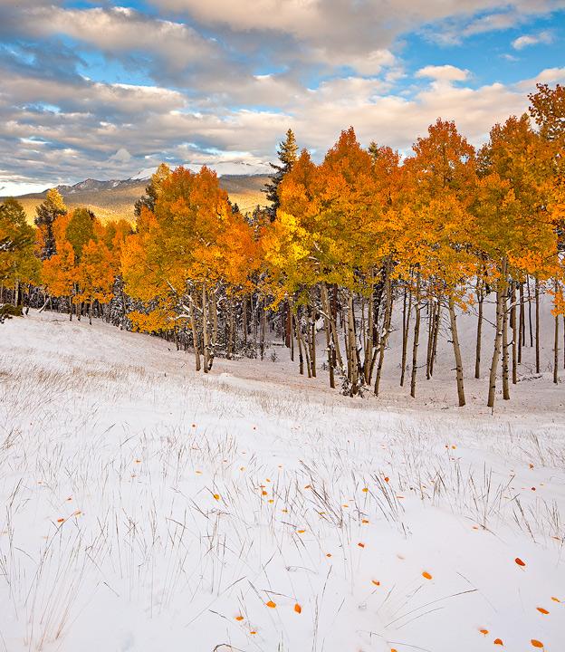 Mueller State Park,Colorado,Pikes Peak,snowstorm, photo