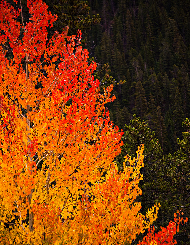 aspen,Monarch Pass, photo