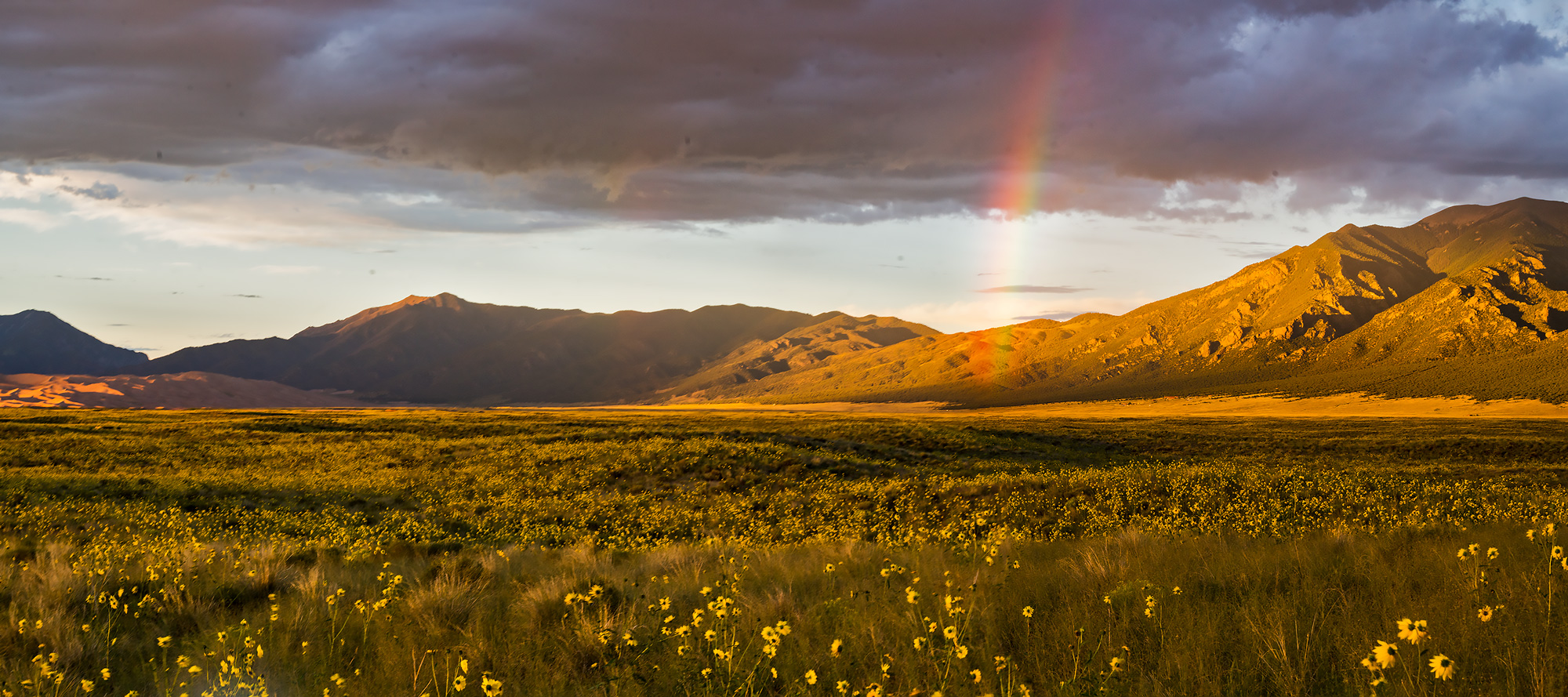 Rainbow over filed of sunflowers south of the Great Sand Dunes.