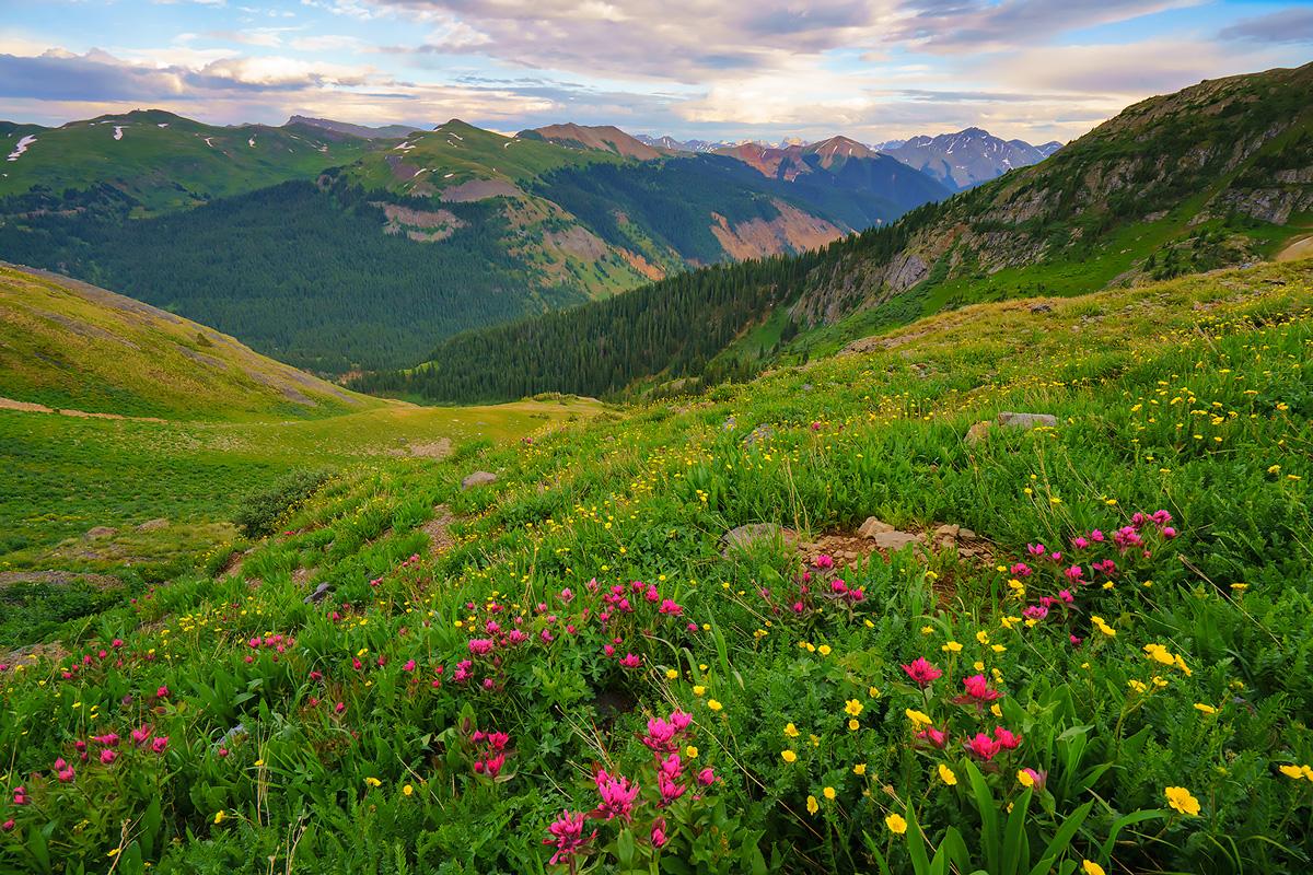 Porphyry Basin, Colorado, paintbrush, wildflowers, photo