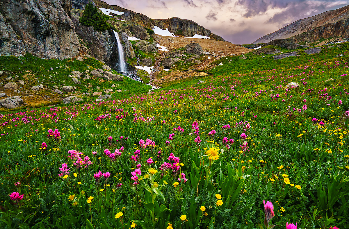 Porphyry Basin, Colorado, wildflowers, waterfall, photo