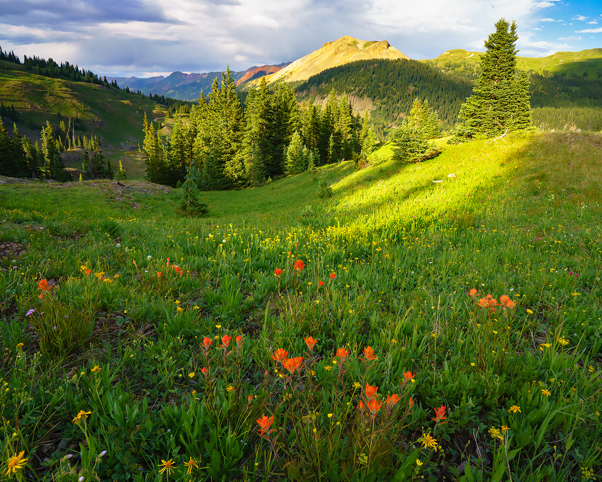 Porphyry, wildflowers, Colorado, photo