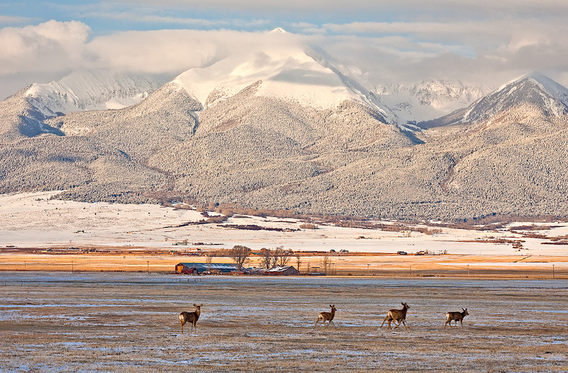 deer,snow,westcliffe,wet mountain,Sangre, photo