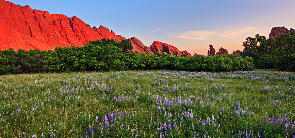 sunrise,Roxborough,Colorado,lupine,field, photo