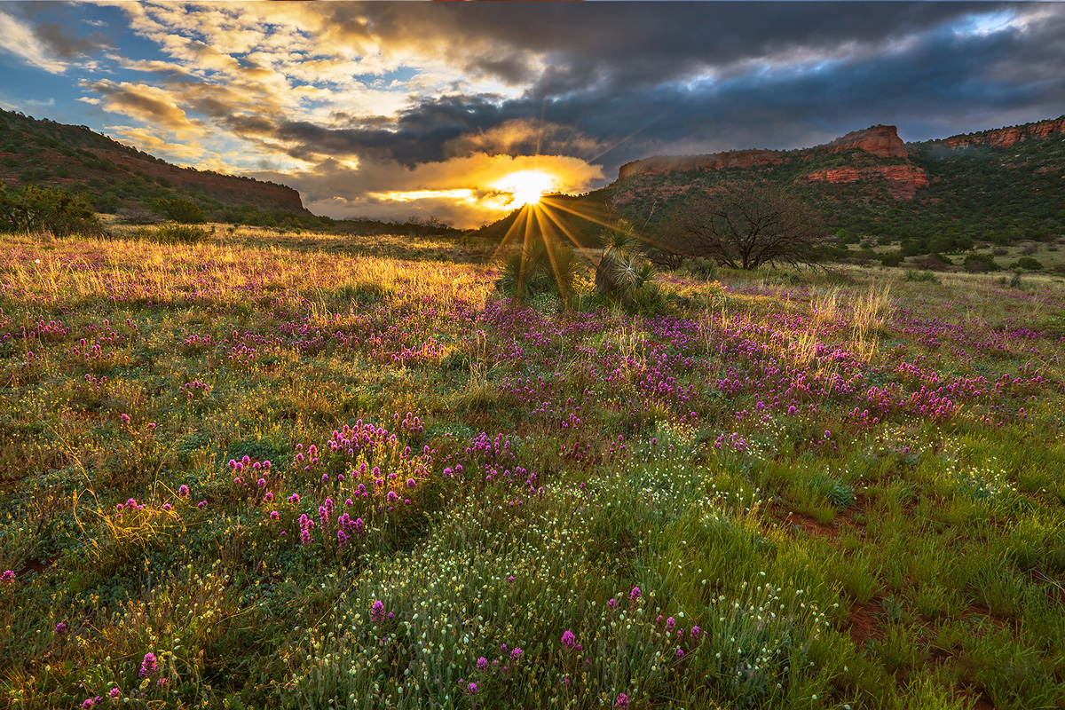 sunrise, bear mountain, meadows,sedona, photo