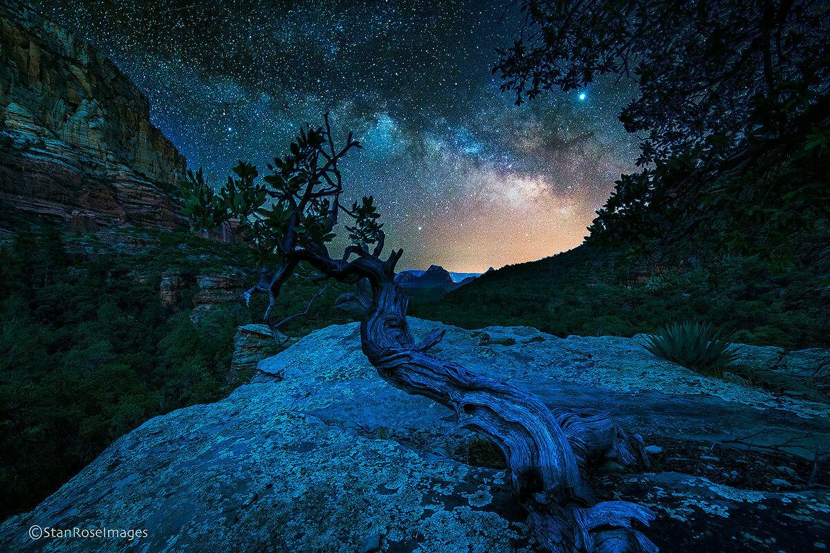 sedona,vortex,tree,arizona,milky way, photo