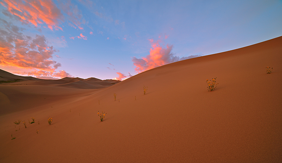 Great Sand Dunes,Colorado,sunflowers,sunset, photo