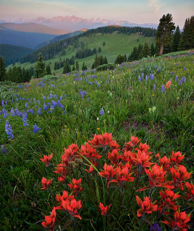 Shrine Ridge,Colorado,sunrise,paintbrush, photo
