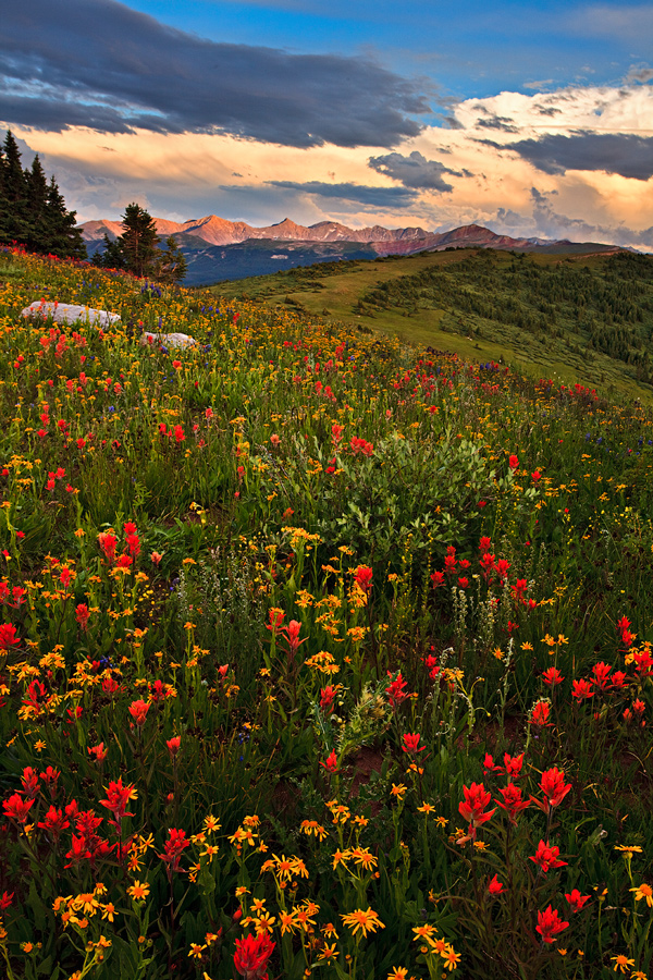 Shrine Ridge and Mountain never dissapoint during the summer wildflower season!