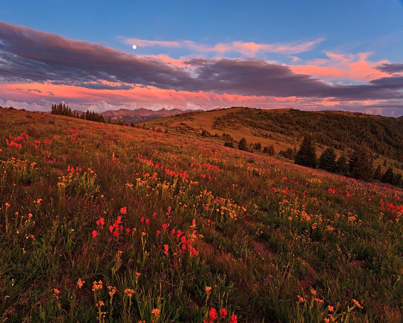 Shrine Ridge,moon,wildflower,Vail, photo