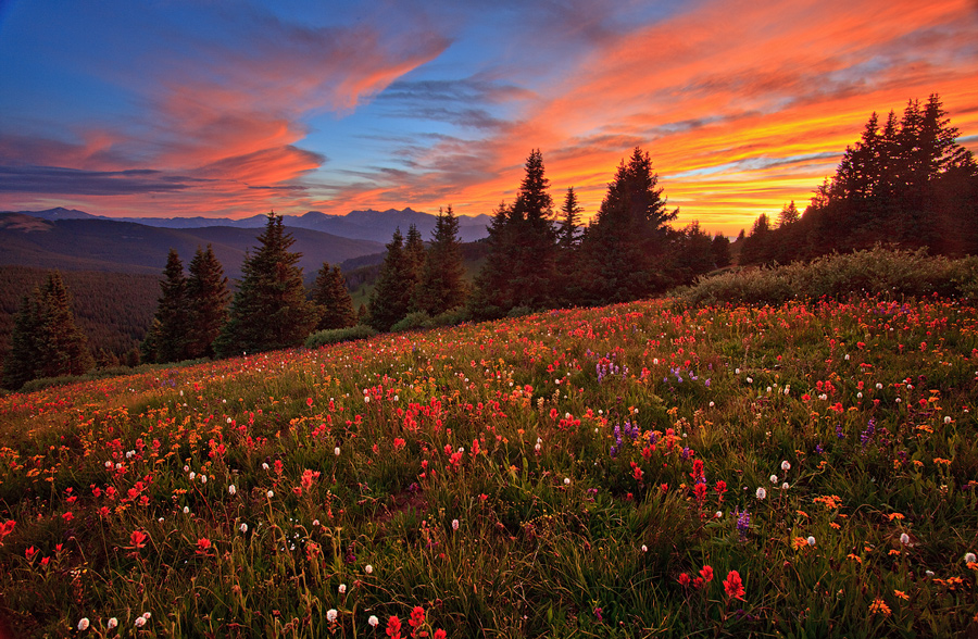 Shrine Mountain,wildflower,sunset,Colorado