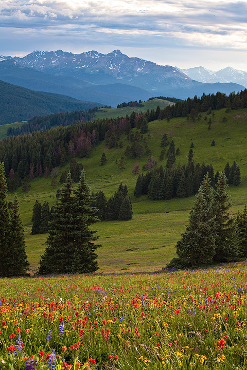 Mount of the Holy Cross,wildflowers,Colorado, photo