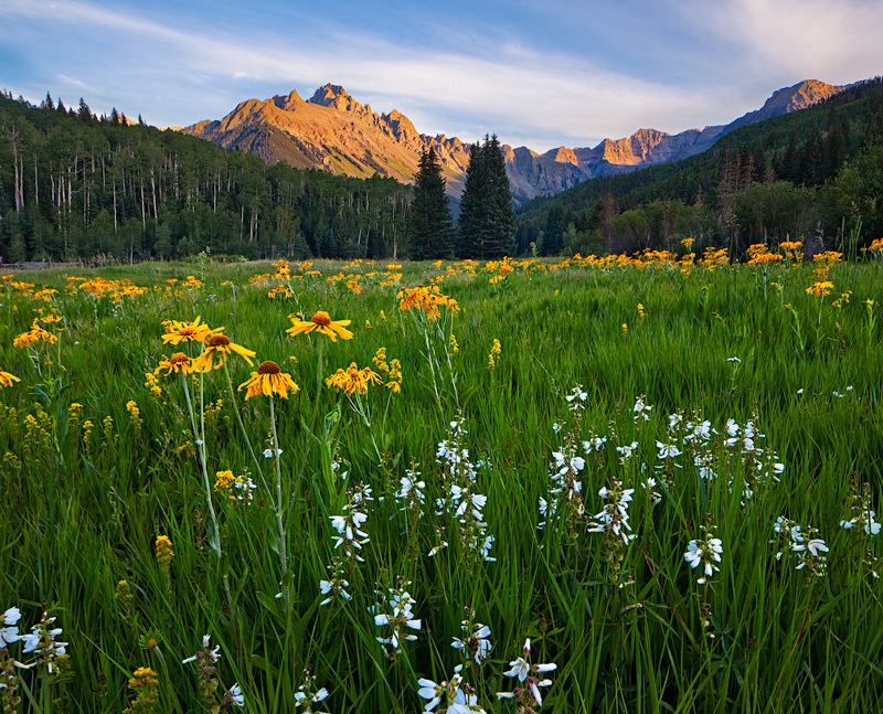 Sneffels,colorado,flowers, photo