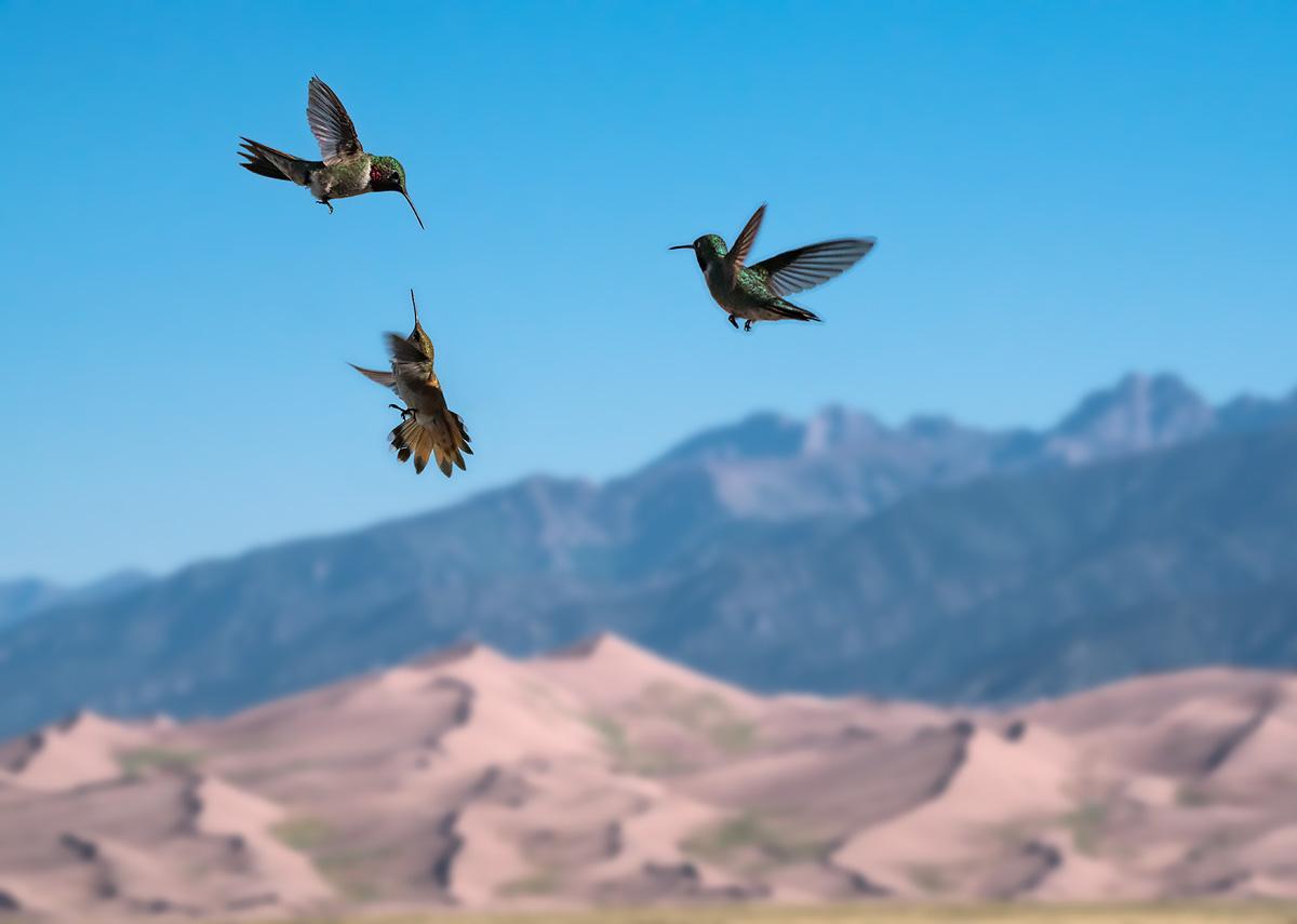 hummingbrds, Great Sand Dunes, Colorado, photo