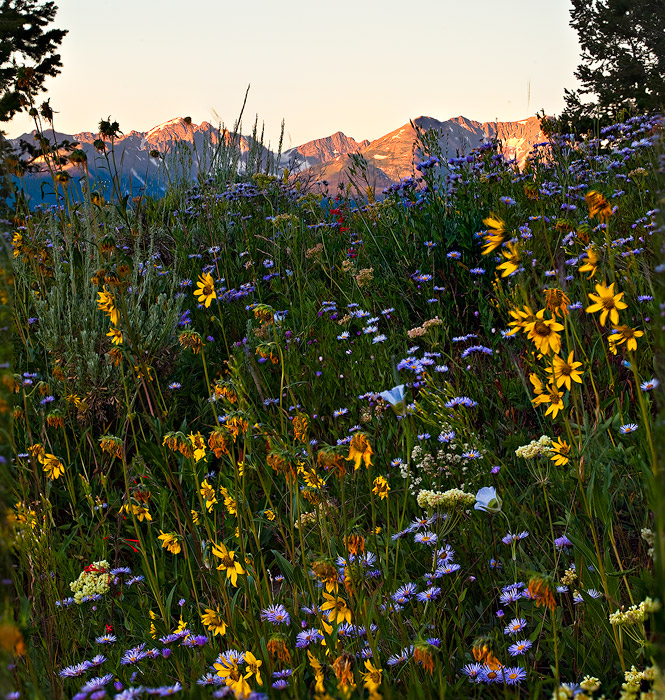 Gore Range from Ute Pass, exploding with August blooms.
