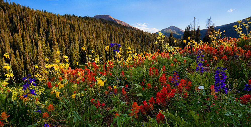 field,flowers,colorado,snowmass, photo