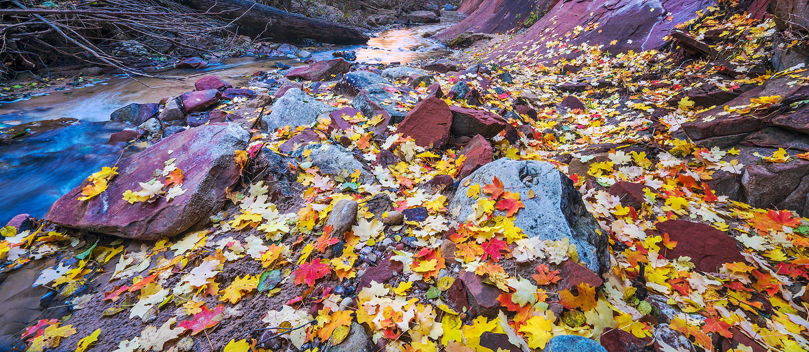 Fallen Leaves along the West Fork trail in October.