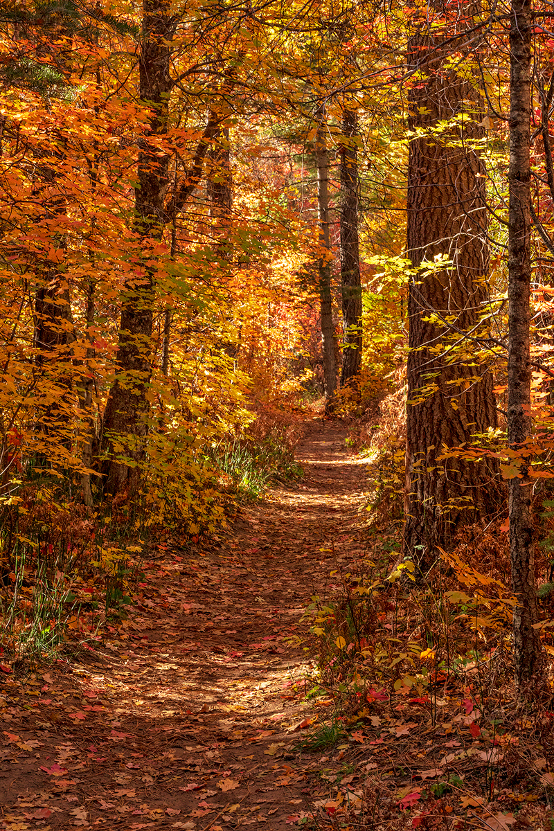 fall colors, West Fork trail, Oak Creek, photo