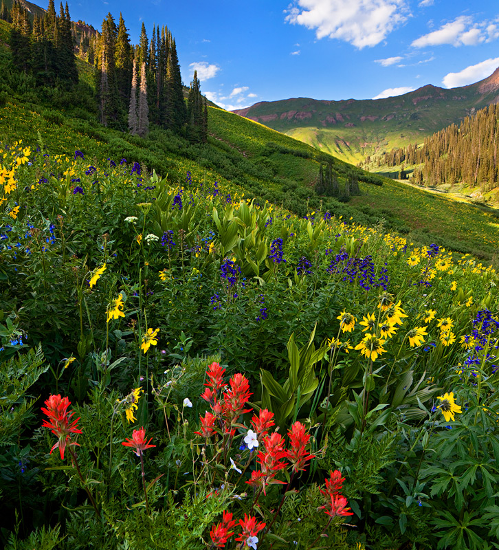 wildflowers,snowmass,colorado, photo