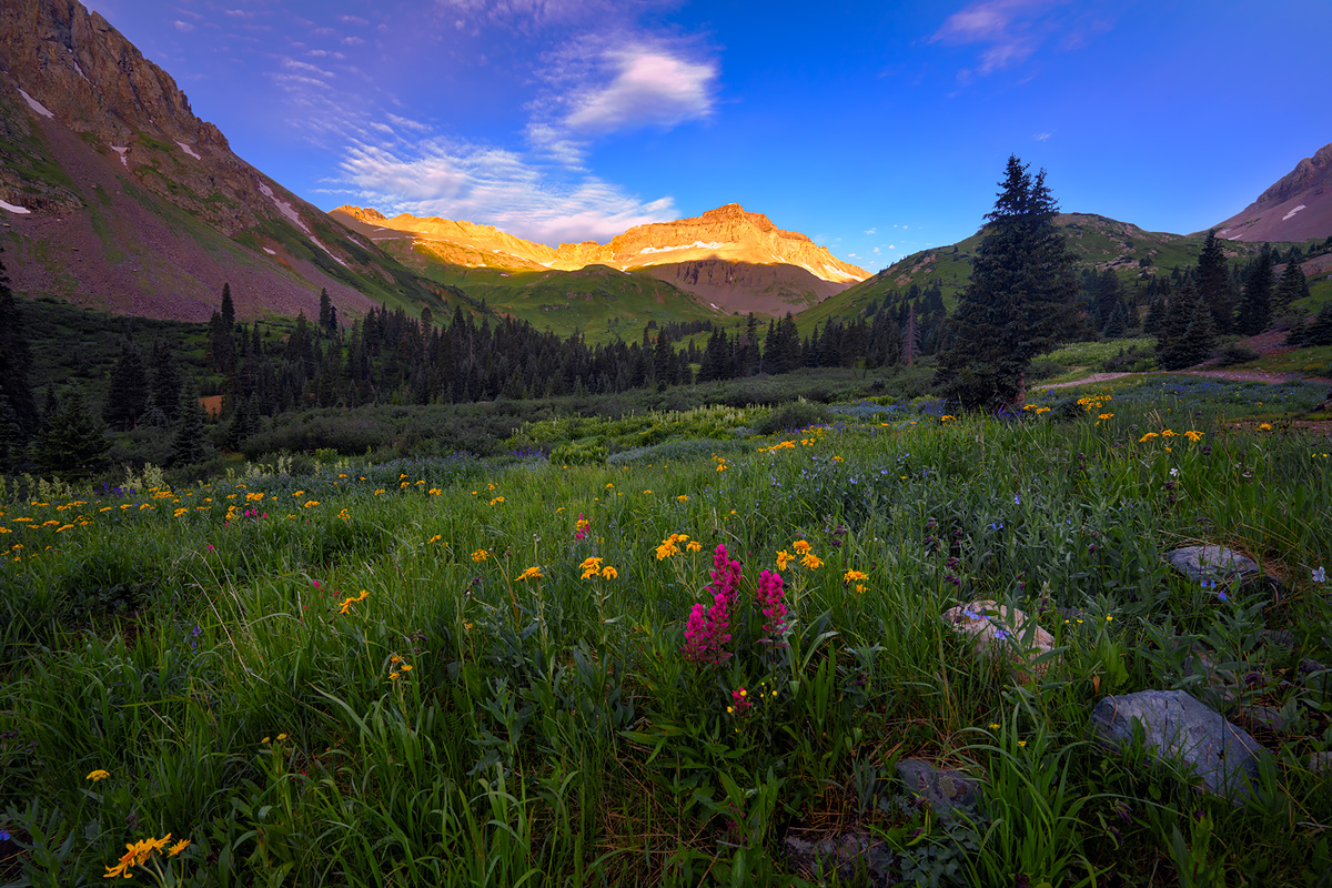 Wildflowers in the San Juan Mountains near Ouray.