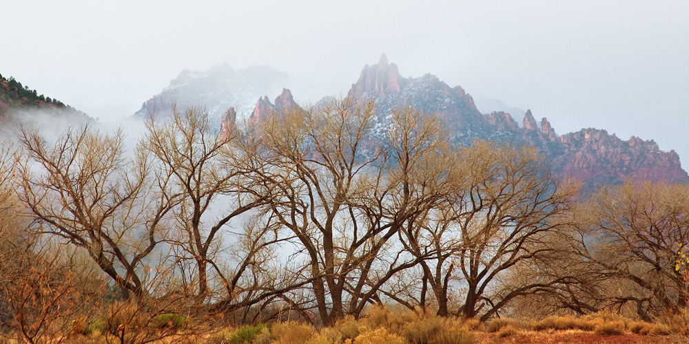 Fog rolls up the Virgin River Valley in Zion.