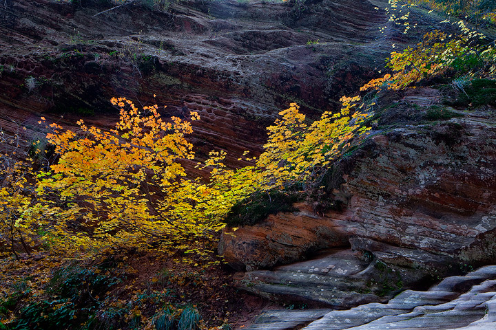 Zion National Park,Hidden Canyon,maples, photo