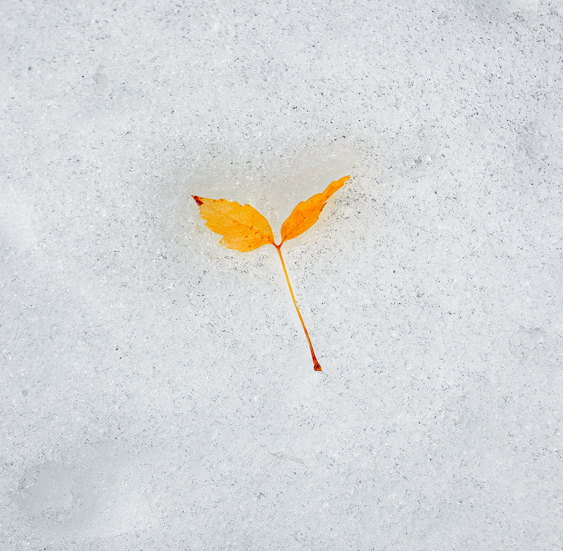 Bandelier,Colorado,leaf,snow, photo