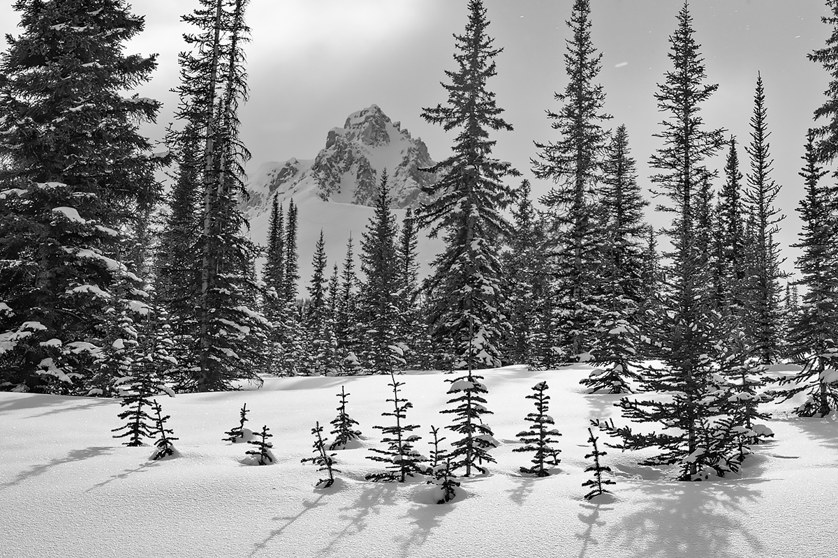 Monument Peak appears through the snow-filled forest in March.